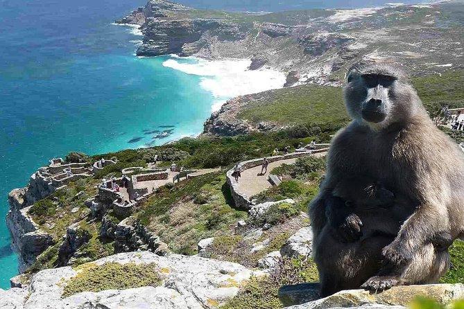 Cape Town: Half-day Cape Peninsula & Half-Day Constantia Winelands PRIVATE Tour