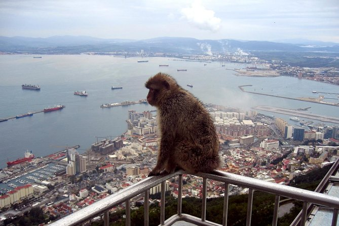 Gibraltar Express - Sightseeing Full Day- From Malaga photo 3