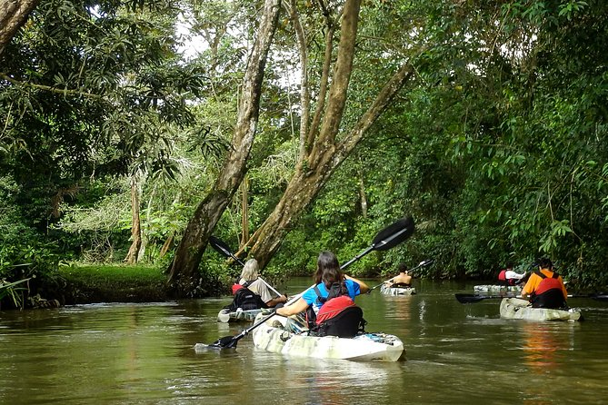 Kayaking a Quiet River in the Most Bio-Diverse Area of Costa Rica
