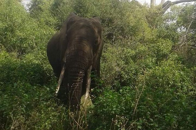 3 DAYS Selous Game Reserve FLY From Zanzibar