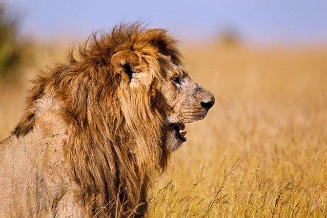 6 Day Simba Safari