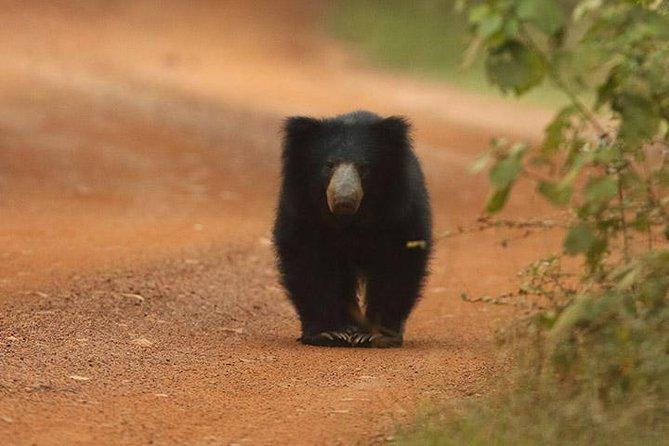 Full day Safari Game Drive in Wilpattu National Park