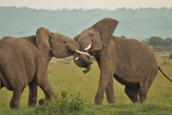 7 Days 6 Nights Kenya Budget Safari