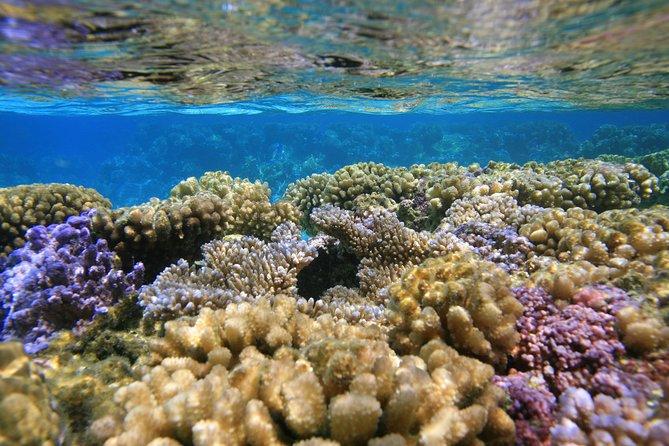 Bora Bora Lagoon Cruise Private Half Day Snorkeling on a Polynesian catamaran
