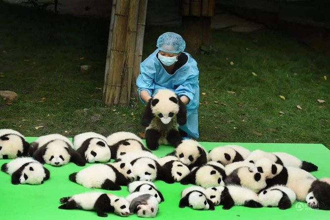 Chengdu Panda Breeding Center and Historic Private Day Tour