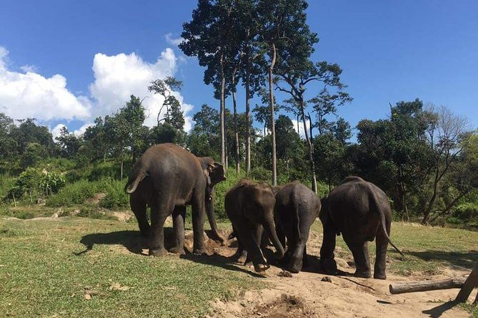 Half day Elephants in Nature Experience (Morning)