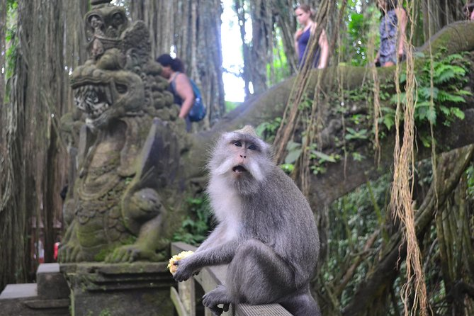 Private Tours The Best Highlight of Ubud photo 8