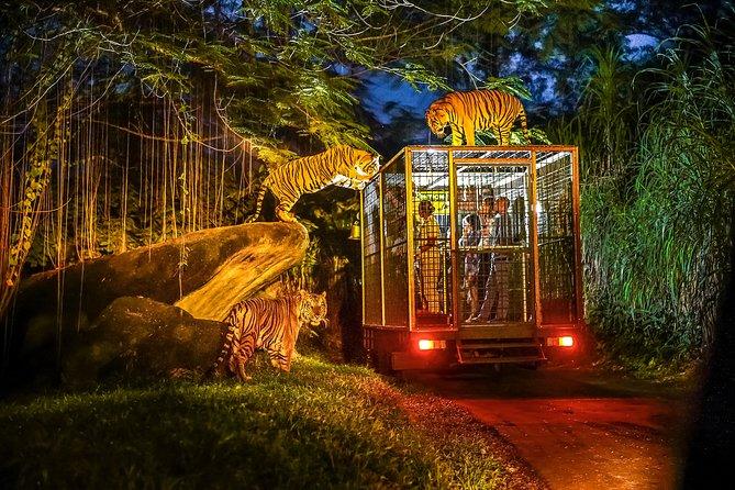Unforgettable Night Safari with BBQ Dinner
