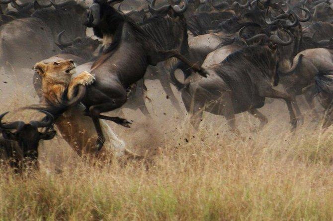 7 days Safari - Westbound Wildlife Migration (mid July only)