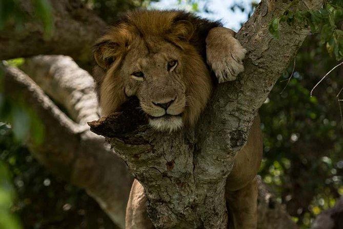 8 Days Murchison Falls, Chimpanzee & Gorilla Safari ( minimum 2 persons )
