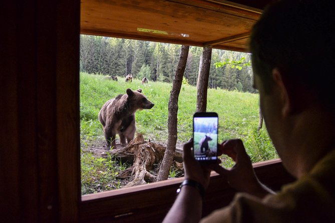 Day Trip & Bear Watching in the Land of Volcanoes