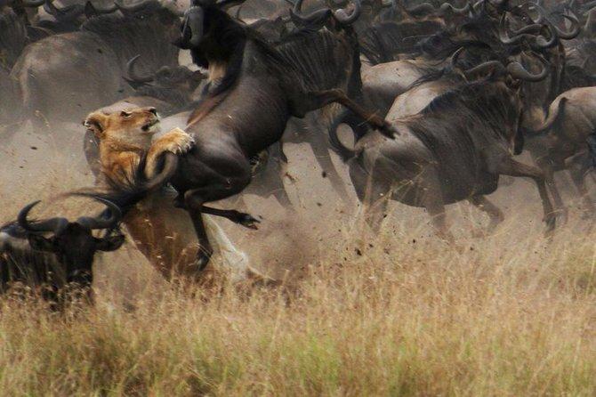 5 days 4 nights Mid Range Safari