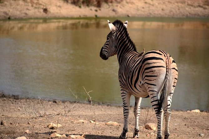 8 days Safari - Southbound Wildlife Migration (November and December only)