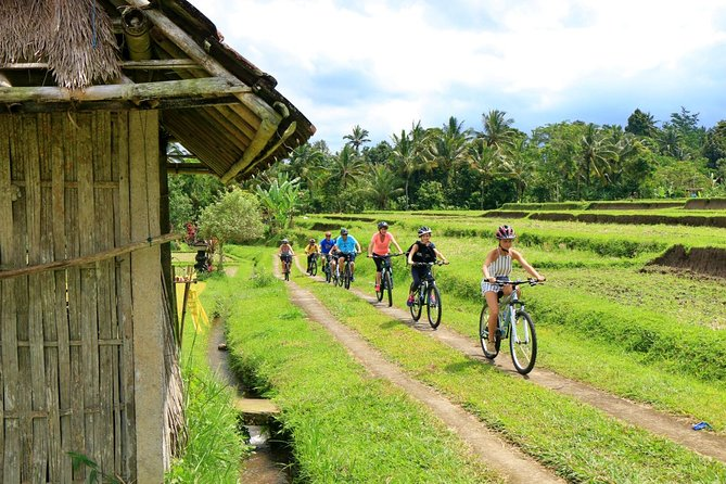 Bike ride in French / English in rice fields, countryside and school visit