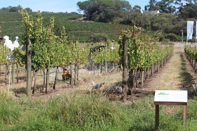 Full Day Wine Tour From Cape Town photo 2