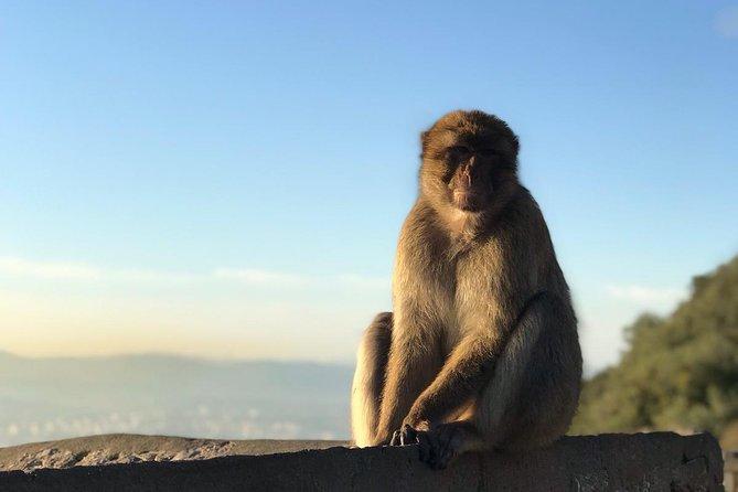 Gibraltar Sightseeing: Premium Rock Tour / Shore Excursion (Private)