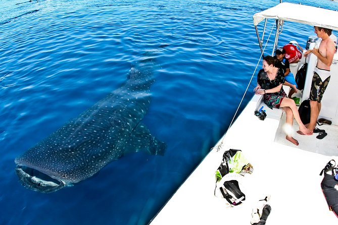 Cancun Whale Sharks All-Inclusive Tour photo 3