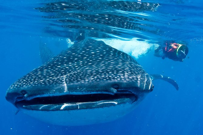 Cancun Whale Sharks All-Inclusive Tour photo 1