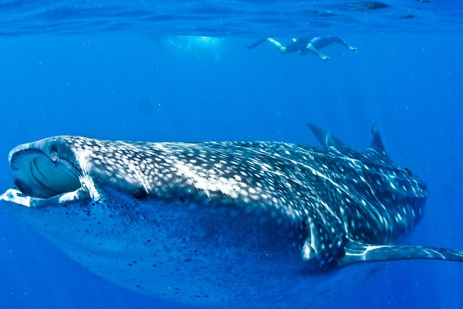 Cancun Whale Sharks All-Inclusive Tour photo 4