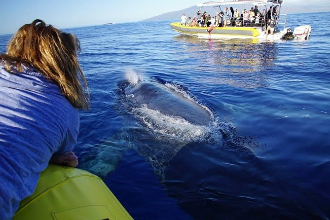 1.5 Hour Early Bird Whale Watch Tour from Lahaina Harbor photo 4