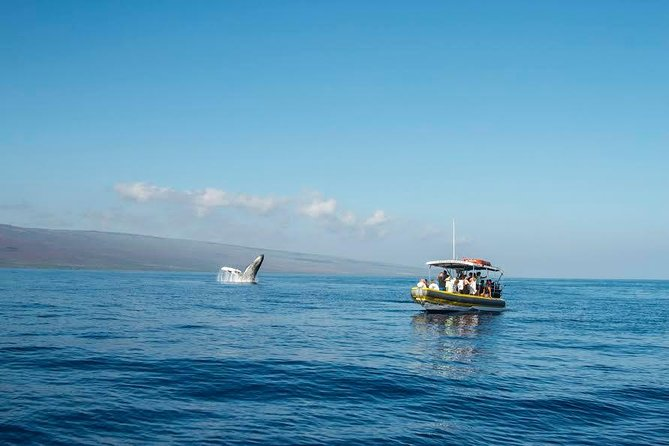1.5 Hour Early Bird Whale Watch Tour from Lahaina Harbor photo 8