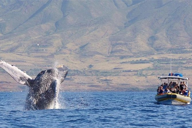 1.5 Hour Early Bird Whale Watch Tour from Lahaina Harbor photo 12