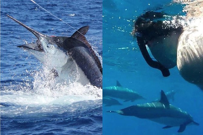 Mixed Dolphin Swim & Fishing Trip