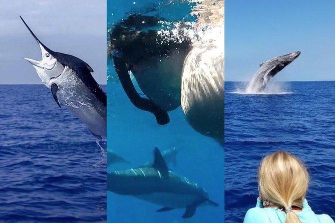Combo Fishing, Dolphin Swim & Whale Watching Trip