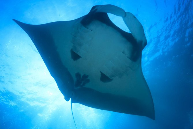 Schwimmen mit Hawaii Manta Rays (Nachtschnorchel)