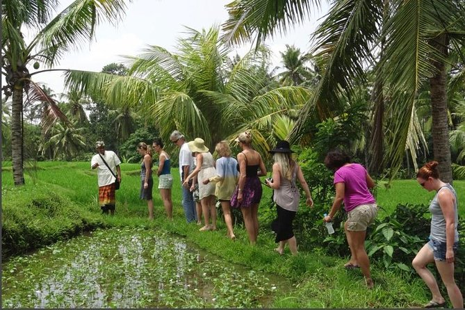 Rural Charm of Bali Tour photo 9