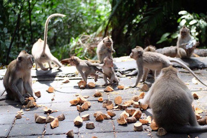 Full Day Tour: Ubud Rafting and Monkey Forest with All-inclusive