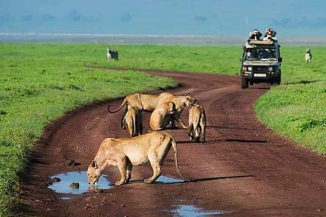 Ngorongoro, Manyara, Tarangire