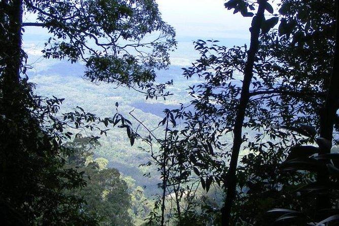 Five-Day Jungle Survival