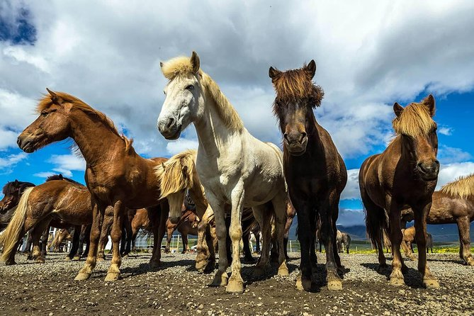 Viking Horse Riding and Golden Circle Tour from Reykjavik photo 2