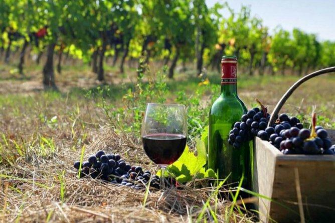 Private tour to Khor Virap, Areni winery, Noravank