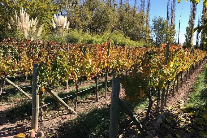 Recorrido vinícola privado en Luján de Cuyo desde Mendoza, Mendoza, ARGENTINA