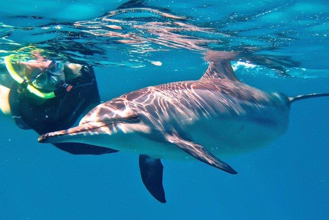 Simma med delfiner i havet