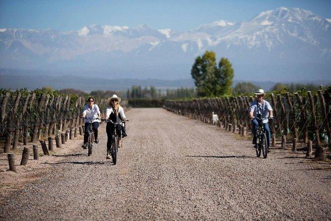 Bike through Bodegas y Viñedos - Mendoza