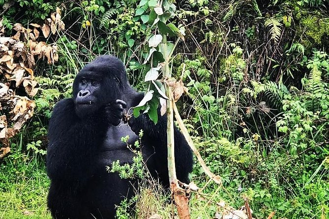 4 Day Gorilla Trekking Tour in Uganda