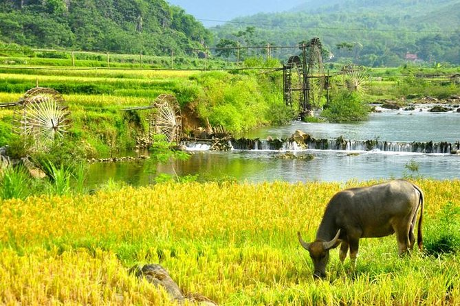 Private transfer between Hanoi and Pu Luong nature reserve