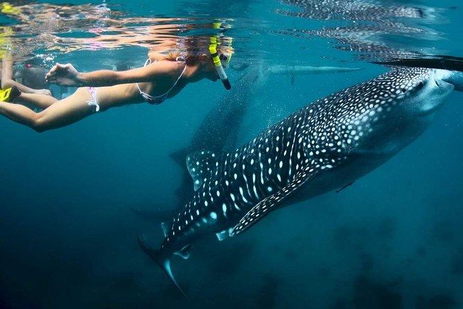 Cebu Whale Shark Watching+Kawasan Waterfalls (Shared Tour)