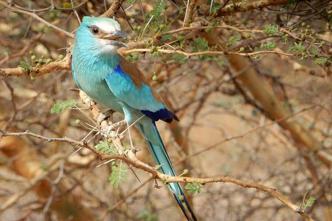 12 Days Tour :Birdwatching in Senegal