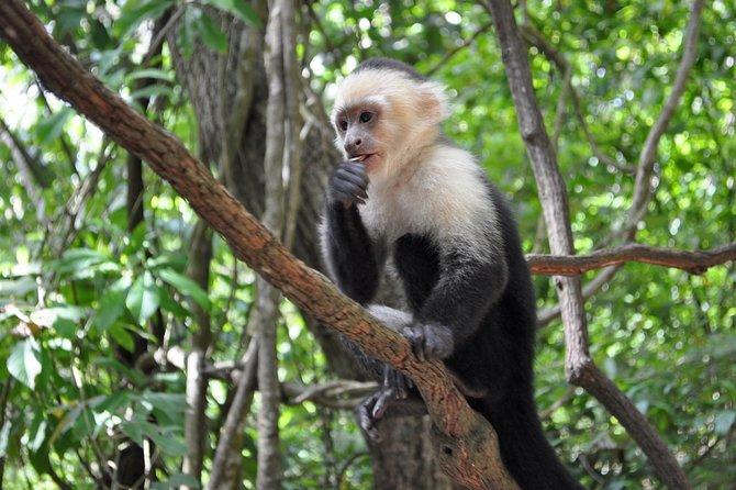 Roatan Island Tour & Daniel Johnson's Monkey and Sloth Hangout Tour