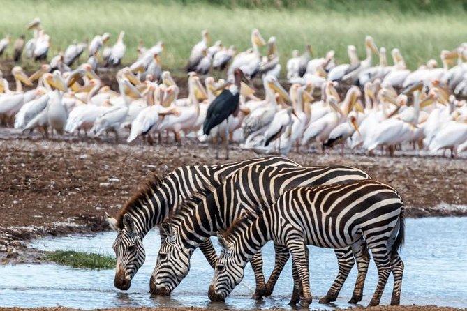 2 Days safari Tarangire (Lake Manyara), Ngoro Ngoro National park (Lake Eyasi)