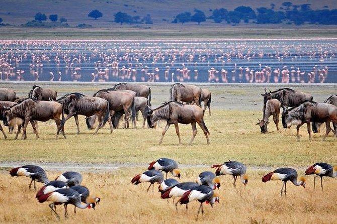 6 days,Tarangire, Serengeti,Ngorongor,Lake Manyara National park