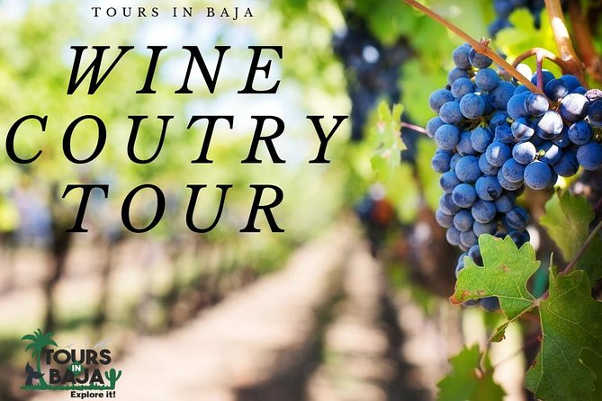 Guadalupe Valley Wine Country tour in Baja