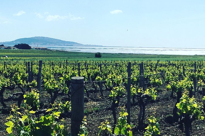 Day Wine Tour from Sete with lunch