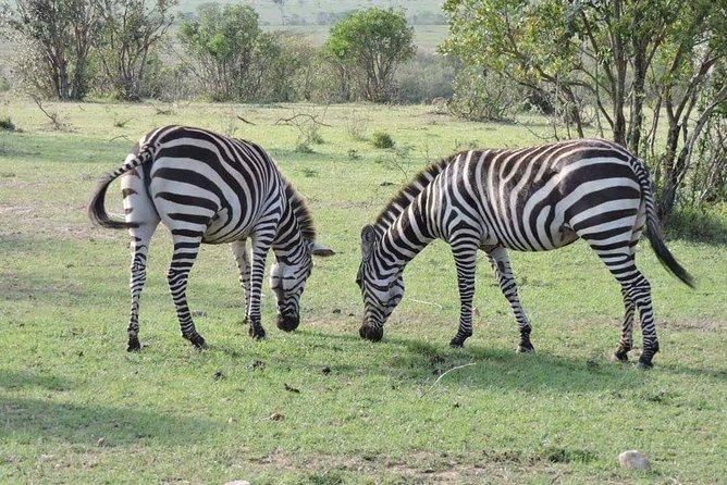 3day's Safari