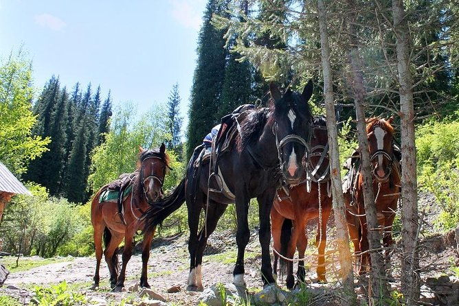 Horse riding adventure in mountains! photo 1