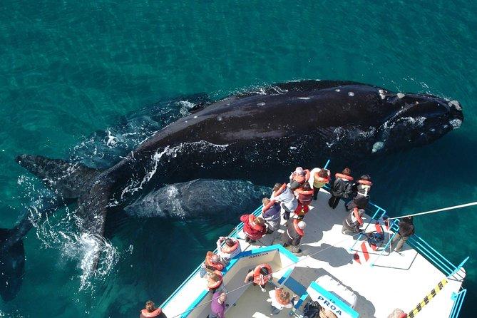 Amazing tour at Peninsula de Valdes, Puerto Madryn, ARGENTINA